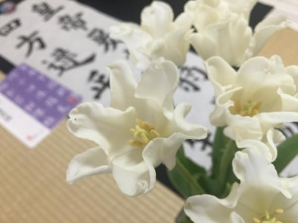 tulip20160414